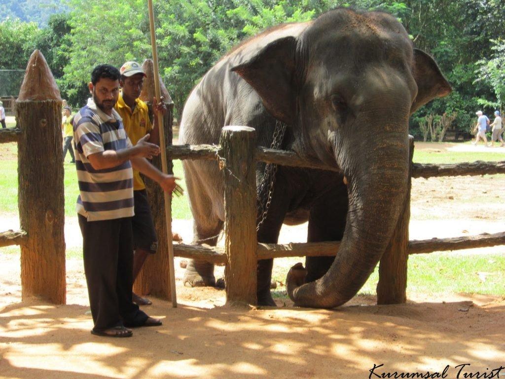 Sri Lanka hakkında - Pinnawala