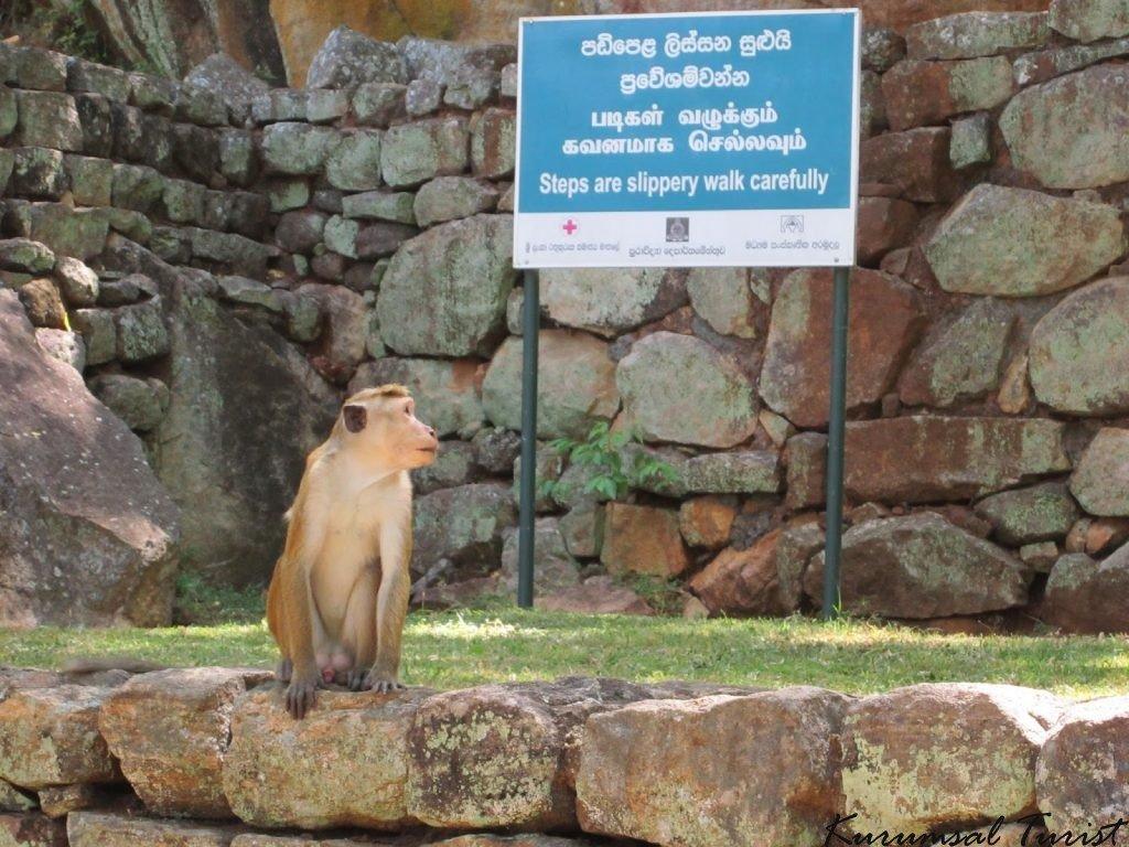 Sri Lanka hakkında